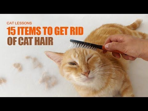15 Ways to Remove Cat Hair Around the House