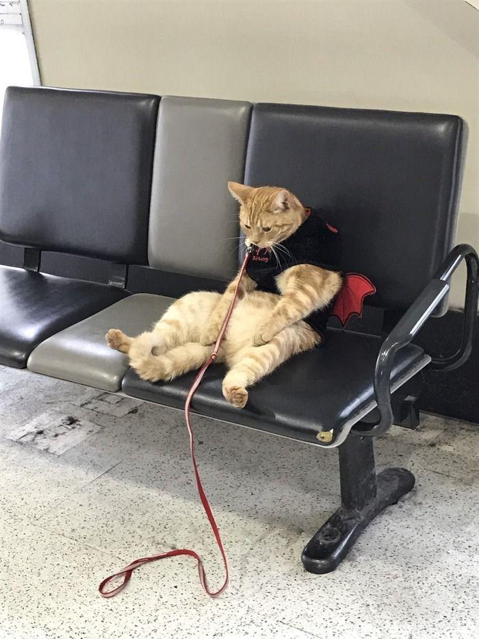 おっさん化したネコが駅のホームに座ってるwwwwwwwwwwww