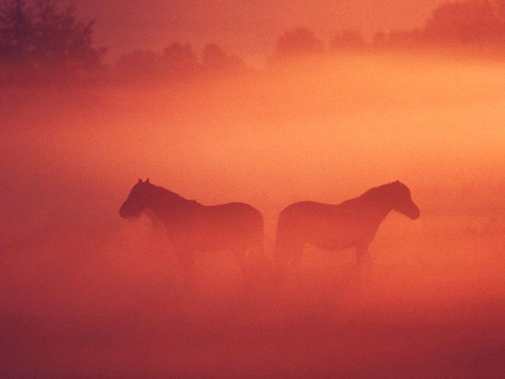 Skrivbordsunderlägg Häst i damm