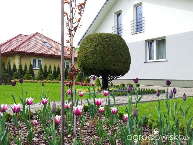 Moja codzienność - ogród Oli - strona 723 - Forum ogrodnicze - Ogrodowisko