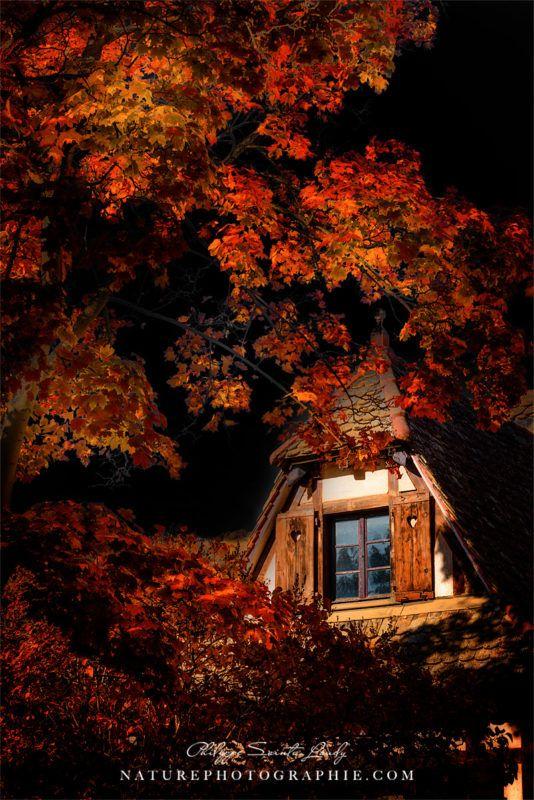 Dernières couleurs d'automne... Ambiance automnale avec une ferme prise à Mutzig en Alsace. Juste une photo que j'aime bien pour ses couleurs et son ambiance.