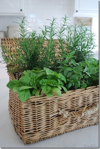 Herbs planted in a basket.