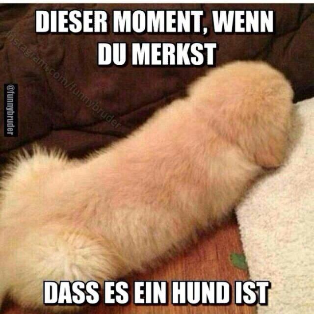 ...ein Hund ist...