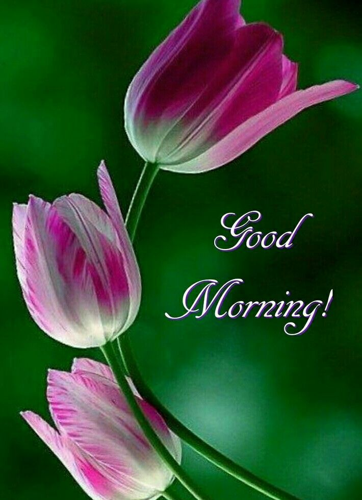 Have A Wonderful Day Morning Pictures Morning Quotes Good