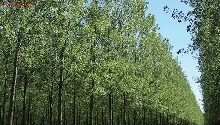 Productores forestales recibirán aportes que estaban demorados hace 8 años