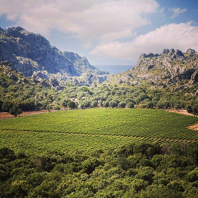 #wineroutesmallorca in Vinyes #Mortitx