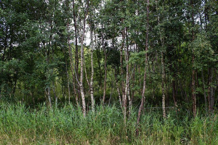 Norway nature