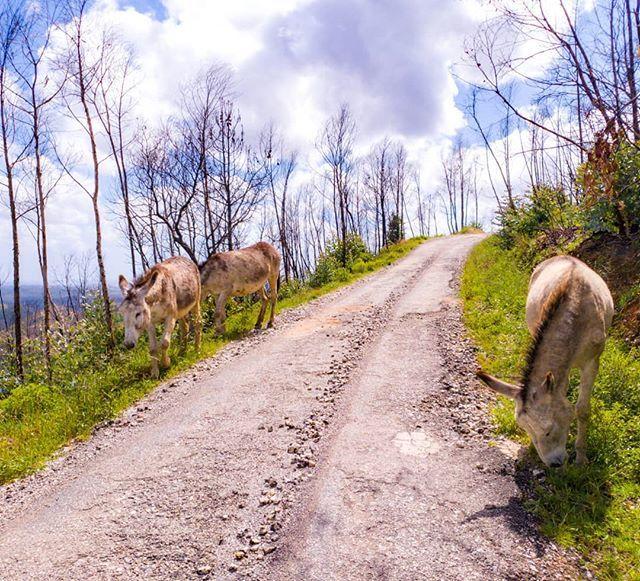 Wanderung In Monchique Portugal Mit Freilaufenden Eseln Von Happy