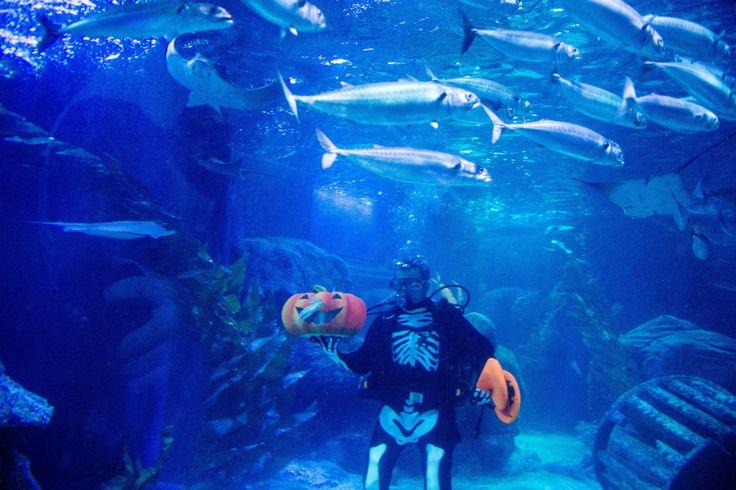 Dormir entre peces (y tiburones) en el Oceanografic de Valencia