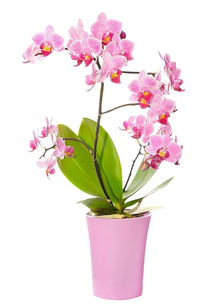 orchidee v domacnosti