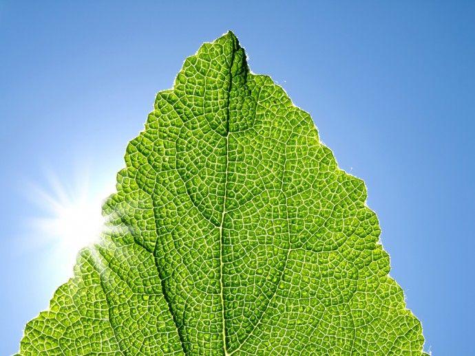 過熱する「人工光合成」技術開発!真のクリーンエネルギー社会へ導くか | FUTURUS(フトゥールス)
