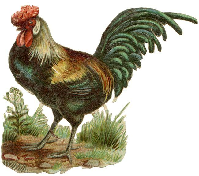 Free Vintage Clip Art - Vintage Chickens: