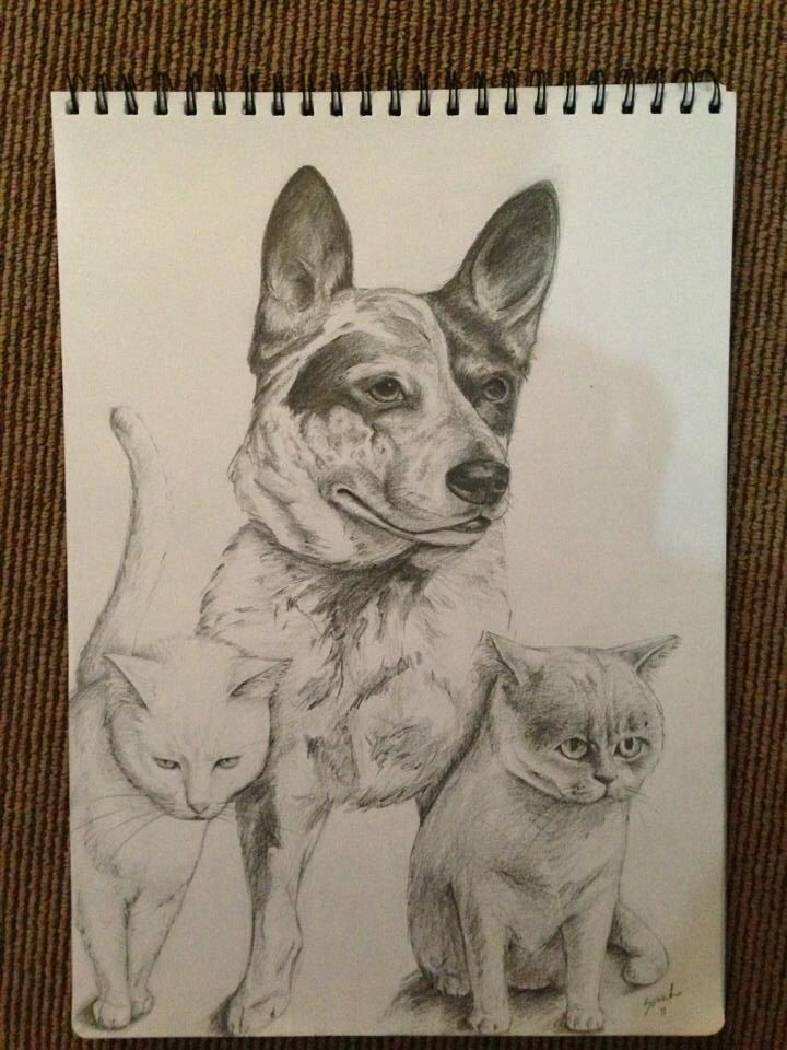 Portrait of Milky, Dexter and Gypsy