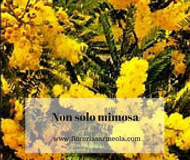 Non solo mimosa per l'8 marzo, Festa della Donna, orchidee in vaso, orchidee recise, bouquet di giacinti, tulipani o ranuncoli possono essere complementari od una valida alternativa ad un grande classico.