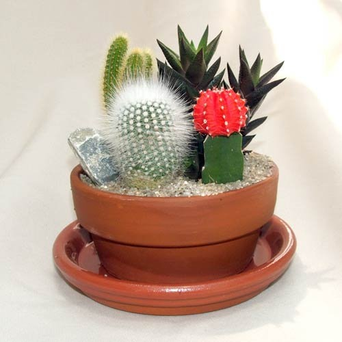 Feng Shui Tip: Be careful where you place spiky plants. They should not be in a position where they can project harmful energy towards a chair where someone might sit. Denise O'Dwyer Feng Shui London UK  www.SpaceWorksFengShui.com