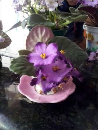 Xícara da vovô Thereza + Flor de violeta