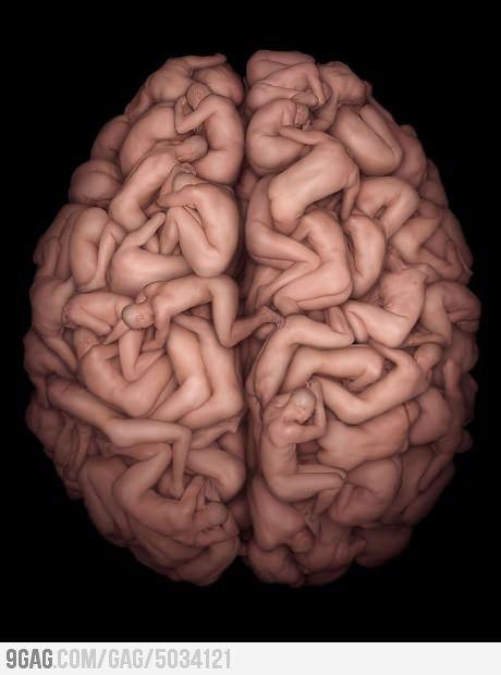 Human's brain