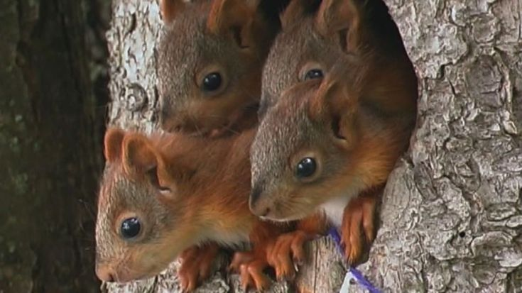 Här träffar vi några tama ekorrar på Fölisön som gärna äter nötter som man matar dem.