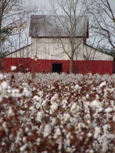 Cotton Barn, Edgefield South Carolina SC