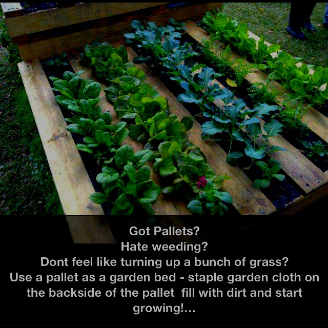 Easy DIY temporary or permanent Garden--- great for renters!