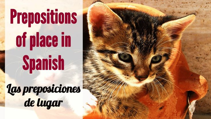 """This video covers how to use Spanish prepositions of place to say where objects are in Spanish – dónde están ubicados los objetos. They are called """"preposiciones de lugar"""" in Spanish. You will see several slides showing things and animals, and their location using Spanish prepositions of place. Las preposiciones de lugar"""