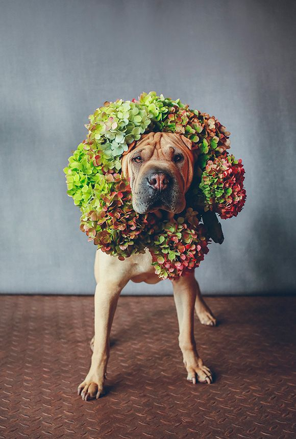 The cutest pups with florals crowns