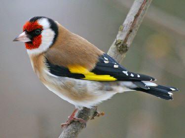 Les 25 meilleures idées de la catégorie Oiseau de paradis sur ...