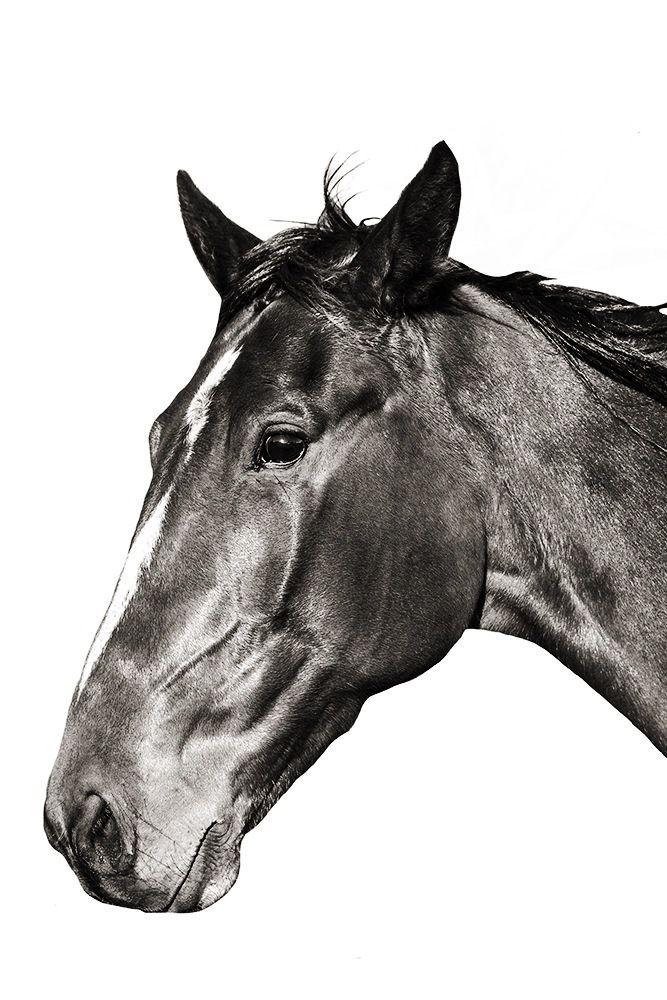 Rabid Horse Artwork Home Facebook - 667×1000