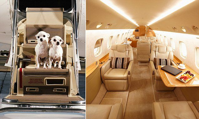 The Craziest Requests Of Clients Of A Private Jet Company Private Jet Private Flights Private