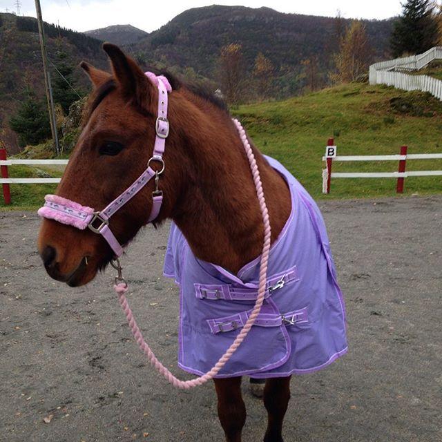 Purple/pink outfit. #HookedOnHööks I www.hookseurope.com I flyontheponny
