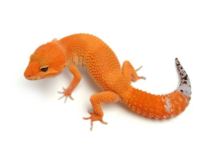 Tangerine Tornado | The Urban Gecko