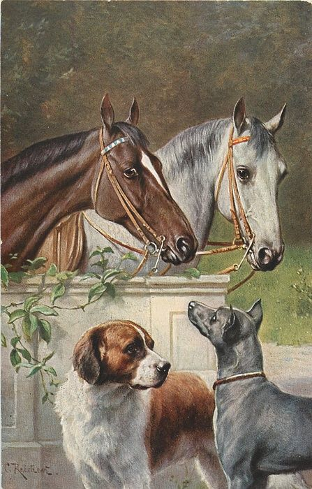 white and brown horses look over stable door terrier with gaudy cloth round neck,collie and long haired terrier observe