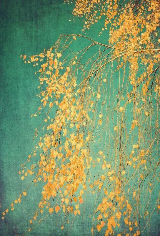 Whispers of Yellow als Alu-Dibond Druck von Ingrid Beddoes | JUNIQE