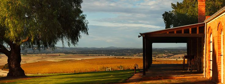 Loving the Autumn view from the Pindarie Cellar Door, on the Western Ridge of the Barossa Valley, South Australia