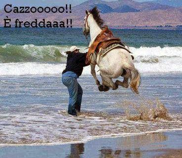 #umorismo #animali