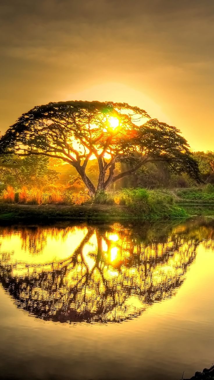 Sunset pond with tree reflection.