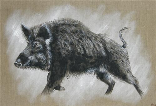 Sanglier 169 Odile Laresche Peintre Animalier Artistes