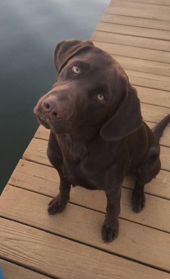 Bentley taking in Lake Gaston.
