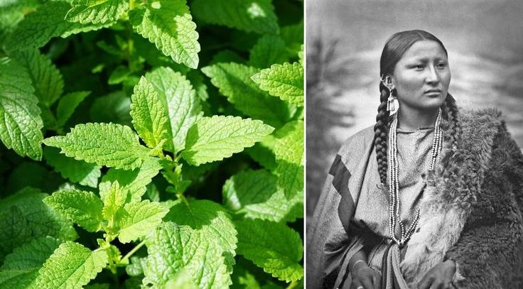 10 Medicinal Plants Native Americans Have Used to Cure Everything!