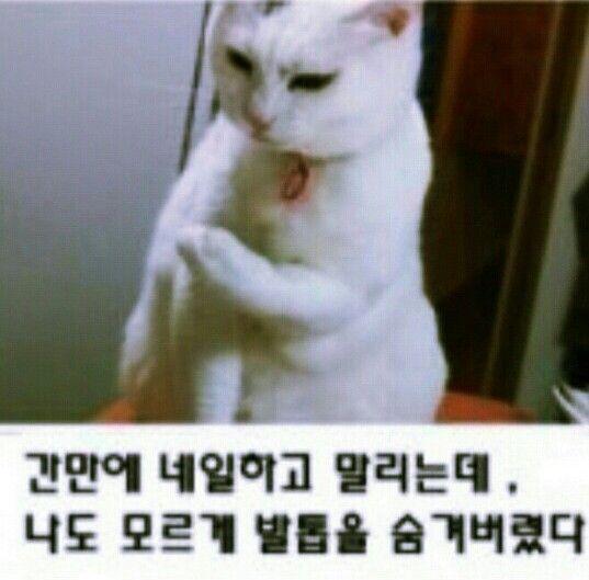 당황고양이