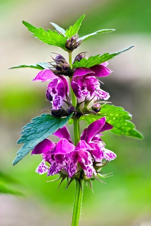 78 best ideas about plantas para jardin on pinterest - Plantas de sol y sombra ...