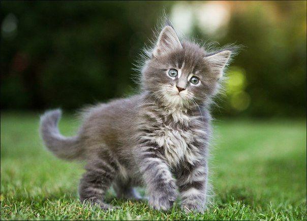 Объясняем гифками с котиками, почему нельзя воровать чужой контент
