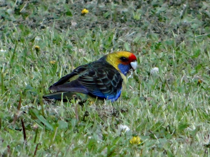 Another visitor in my backyard, October 2014