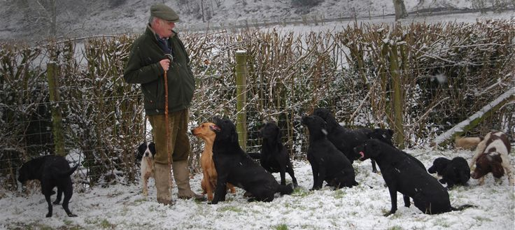 Image result for working cocker spaniel puppies