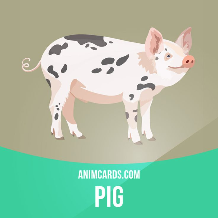 Pigs that are allowed to forage may be watched by swineherds. Because of their foraging abilities and excellent sense of smell, they are used to find truffles in many European countries. #english #englishlanguage #learnenglish #studyenglish #language #vocabulary #dictionary #englishlearning #vocab #animals #pig #pigs #mammals