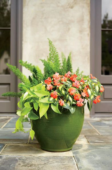 17 best images about container combinations warm colors for Low maintenance outside plants