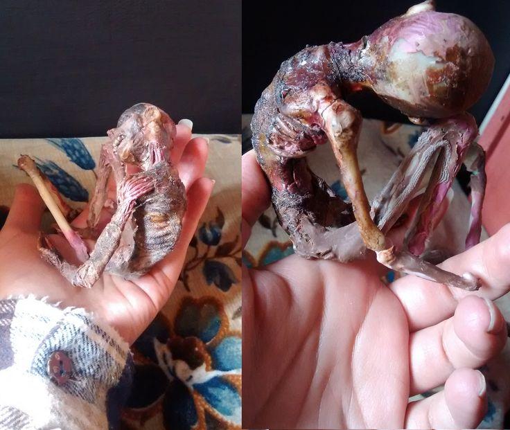 by Alejandra Virginia  Wip 25cm. #personalproject #wip #workinprogress #inprocess #clay #mummy #yokai #youkai #japan #japon #escultura #muerte #museum #mythology #cryptozoology #bones #sculpt #handmade #instachile #art #fantasyart #fantasy #characterdesign #anatomy #anatomia #oddity #oddities #dark #rarezas