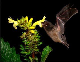Il piacere di sapere che: Come chiamare attirare insetti impollinatori sulle...