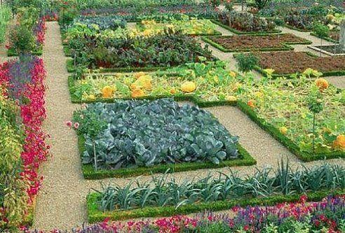 овощи растущие в тени - Поиск в Google