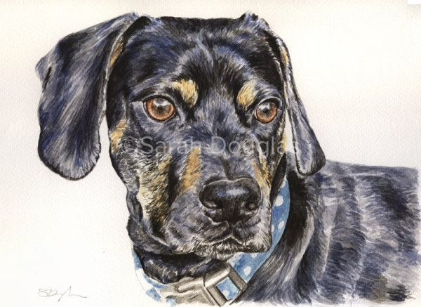 watercolour painting of jack russel and cocker spaniel cross breed dog by Sarah Douglas